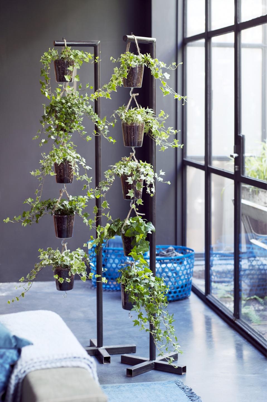 Efeu Zimmerpflanze newsansicht im garten center röttger