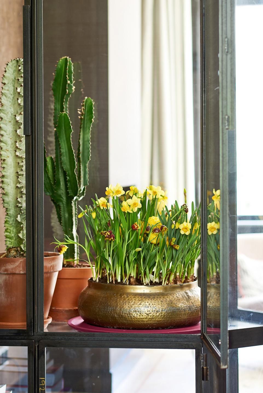 zimmerpflanze des monats im garten center r ttger. Black Bedroom Furniture Sets. Home Design Ideas