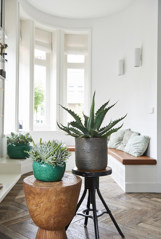 Zimmerpflanze des monats im garten center r ttger for Zimmerpflanzen dekorativ