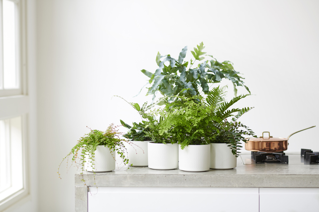 Zimmerpflanze Des Monats Im Garten Center Rottger